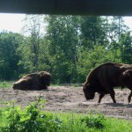 Mehr Wild-West Gefühl als auf der Cowboy Ranch :)