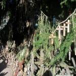 auch an dem einen Baum hängen zahlreiche Kreuze